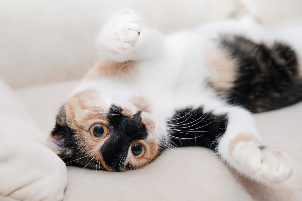 Image of a young kitten